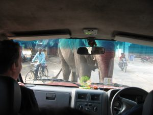elephant stickup through the windshield