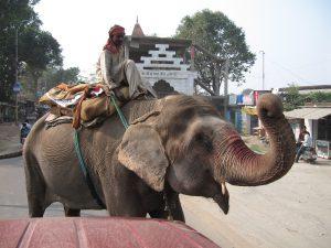Elephant stickup